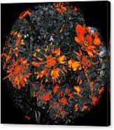 Marigold Fire Canvas Print