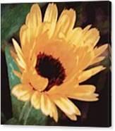 Marigold Impressions Canvas Print