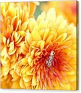 Ailanthus Webworm Visits The Marigold  Canvas Print