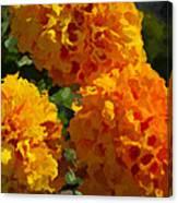 Marigold Mops Canvas Print