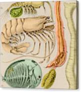 Marine Fauna Canvas Print