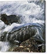 Marine Iguana Pair In Surf Galapagos Canvas Print