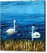 Marion Lake Swans Canvas Print