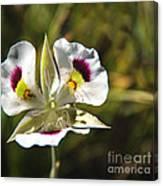 Mariposa Lily Canvas Print