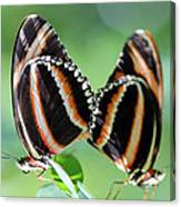 Mariposas Canvas Print
