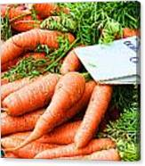 Market Carrots By Diana Sainz Canvas Print