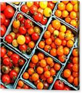 Market Fresh Tomatos Canvas Print