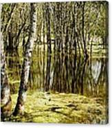 Marsh At Cheadle Lake Canvas Print