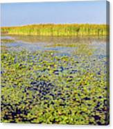 Marsh At Edge Of Lake Okeechobee Canvas Print