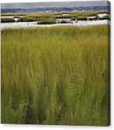 Marsh At Milford Point Canvas Print