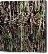 Marsh Dwellers Canvas Print