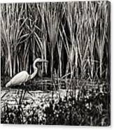 Marsh Hunter Canvas Print