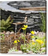 Marsh Marigolds Canvas Print