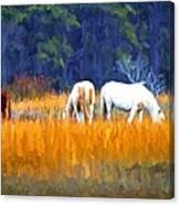 Marsh Ponies Canvas Print