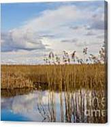 Marsh Reed Canvas Print