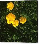 Martha's Flowers Canvas Print