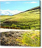Maryhill Spring 2014  Canvas Print
