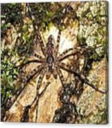 Brown Fishing Spider Canvas Print