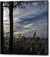 Maryland Wetland 2 Canvas Print