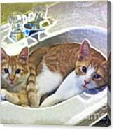 Mary's Cats Canvas Print