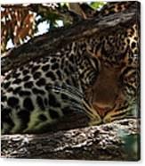 Masai Mara Leopard  Canvas Print