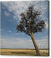 Masai Mara National Reserve Canvas Print
