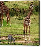 Masai Mara Wildlife Scene Canvas Print
