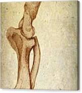 Mastodon Leg Bones Canvas Print