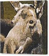 Mat-su Moose Canvas Print