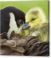 Maternal Love Canvas Print