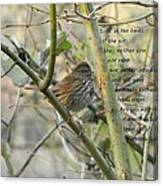 Mathew 6 Vs 26 Thrush Canvas Print