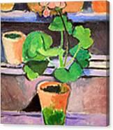 Matisse's Pot Of Geraniums Canvas Print