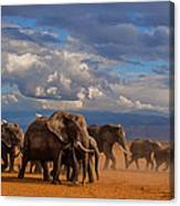Matriarch On Amboseli Canvas Print