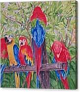 Maui Macaws Canvas Print