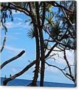 Maui Tree Silhouette Canvas Print