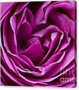 Mauve Rose Petals Canvas Print