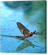 Mayfly Reflected Canvas Print