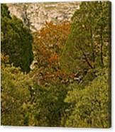 Mckittrick Canyon Trail Canvas Print