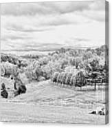 Meadow Bw Canvas Print