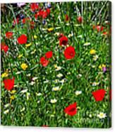 Meadow Flowers - Digital Oil Canvas Print
