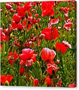 Meadow Flowers Canvas Print