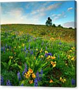 Meadow Gold Canvas Print