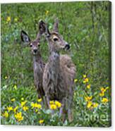 Meadow Meal Canvas Print