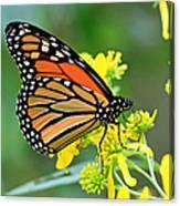 Meadow Monarch Canvas Print