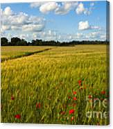 Meadow Of Poppies Canvas Print
