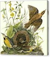 Meadow Starling Or Meadow Lark. 1. Male. 2 Canvas Print