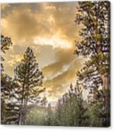 Meadow Sunset Gold Canvas Print