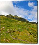 Meandering Wall Canvas Print