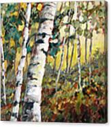 Meandering Woods Canvas Print