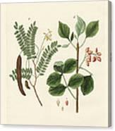 Medicinal Plants Canvas Print